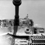 German Tiger